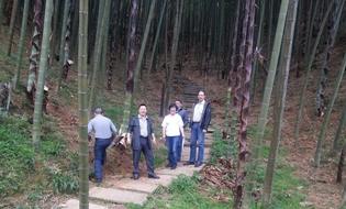 亚博国际娱乐_永安林业-永安11万亩竹通过FSC-FM联合认证