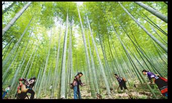 亚博娱乐pt客户端_安徽广德13万亩竹林通过FSC-FM联合森林认证