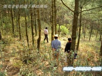 亚虎娱乐_西南第一家林场-华东木业禄丰村林场获得FSC-FM证书