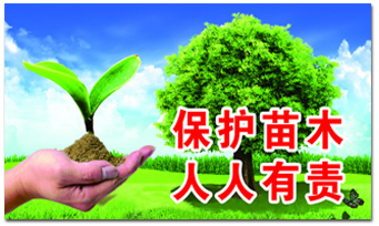 Anhui Guangde 13 million mu of bamboo forest through FSC-FM joint forest certification