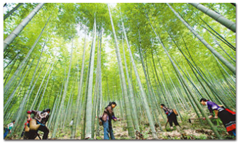 Southwests first forest - East Wood Lufeng Village Forest FSC-FM certificate